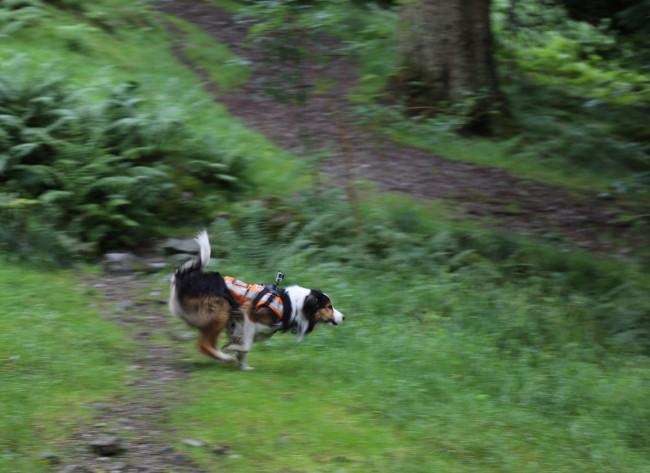 smallrunningdog