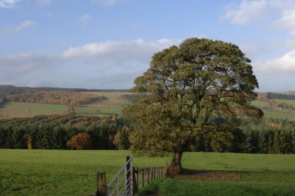 Hamsterley Forest